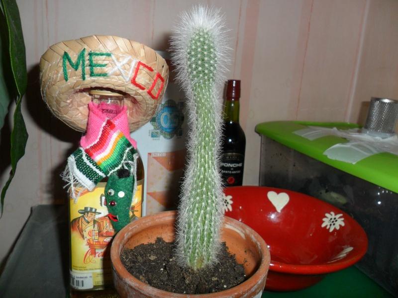 Mes bébés cactus - Page 2 Sam_2634