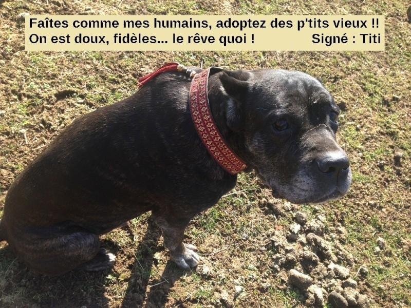 Adopter un vieux chien et chiot (au même moment) - Page 2 Img_0310