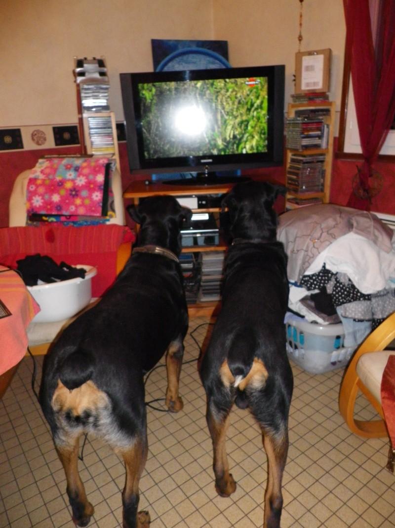 Gros problème pour un poste de télévision en famille Imgp0011