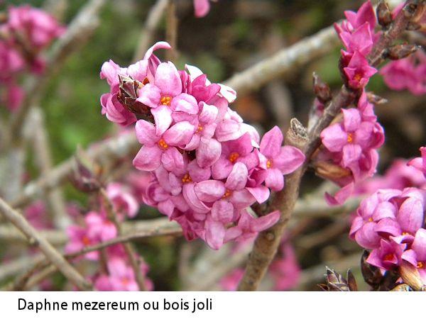 Flore auvergnate Bois-j10