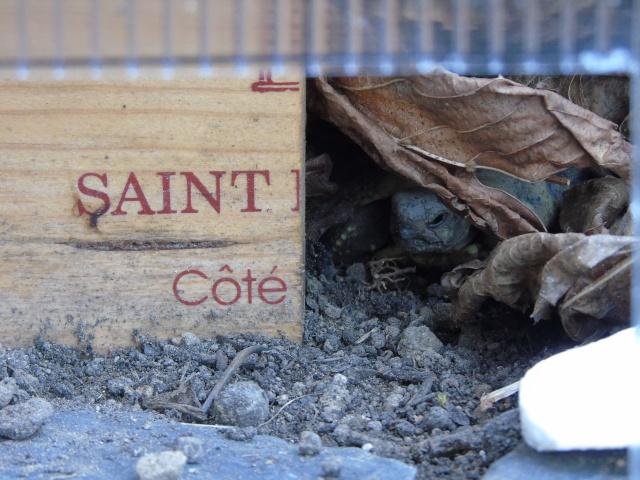 Hibernation de Sissi la petite boettgeri - Page 4 Dsc00710