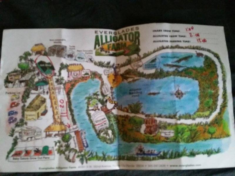 Tr Miami- everglades- Universal-Disney world- Discovery Cove 11139810