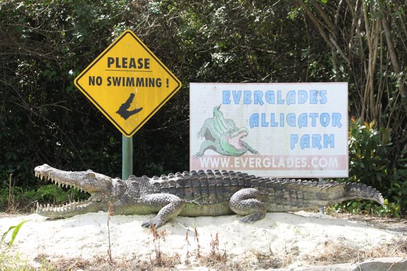 Tr Miami- everglades- Universal-Disney world- Discovery Cove Img_8513