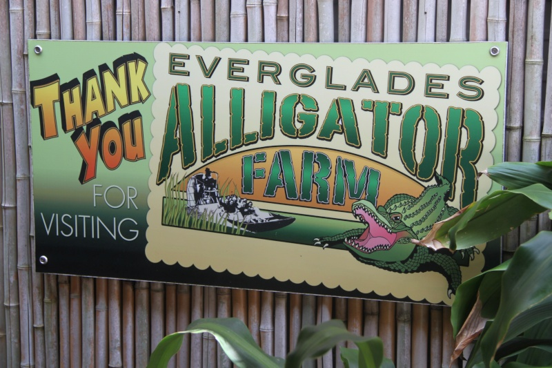 Tr Miami- everglades- Universal-Disney world- Discovery Cove Img_8515