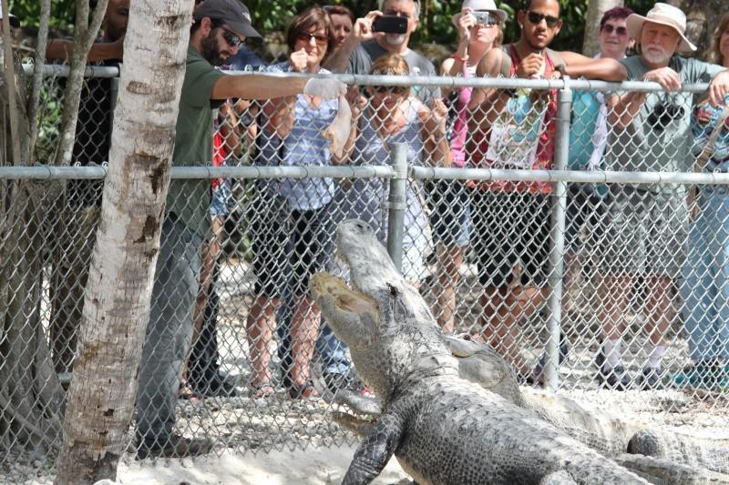 Tr Miami- everglades- Universal-Disney world- Discovery Cove Img_8517