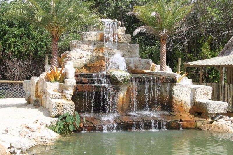 Tr Miami- everglades- Universal-Disney world- Discovery Cove Img_8521