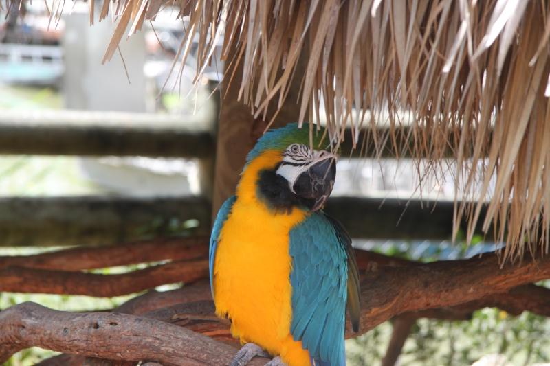 Tr Miami- everglades- Universal-Disney world- Discovery Cove Img_8527