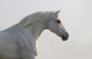 Jeux des petits chevaux de Mme Vanity Fair.  100e5c10