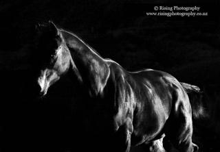 Jeux des petits chevaux de Mme Vanity Fair.  Img_1411