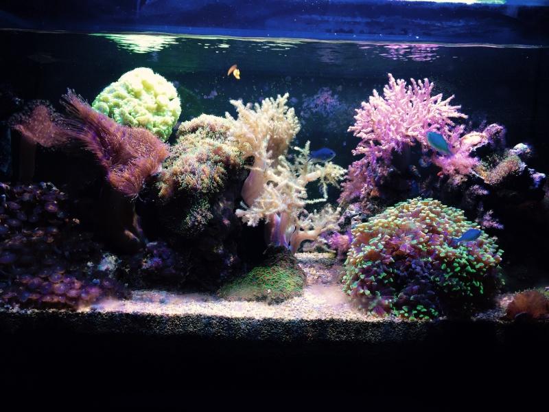 Aquarium  200 l - Page 10 Fullsi10