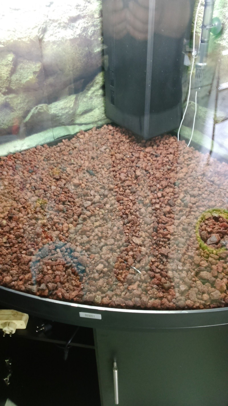 juwel trigon 350 litres biotope amazonien  - Page 2 Dsc_0017