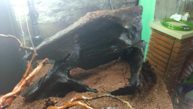 juwel trigon 350 litres biotope amazonien  - Page 2 Dsc_0026