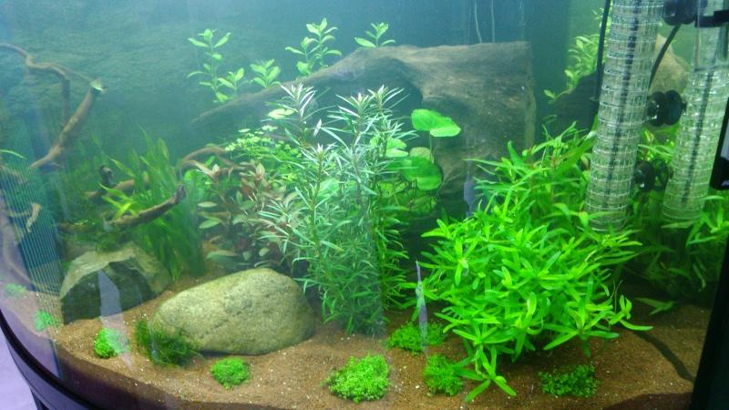 juwel trigon 350 litres biotope amazonien  - Page 2 Dsc_0028
