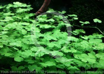 juwel trigon 350 litres biotope amazonien  - Page 2 Hydroc10