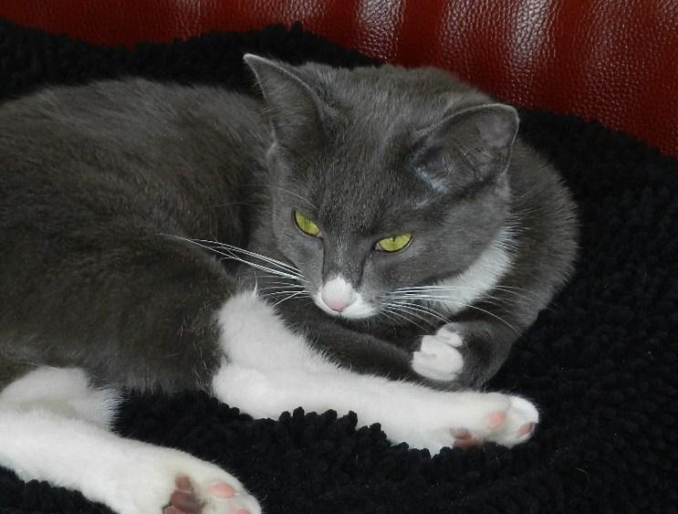 Berlioz (ancien Juki), mâle gris et blanc né 1er juin 2014 - Page 3 B_dscn12