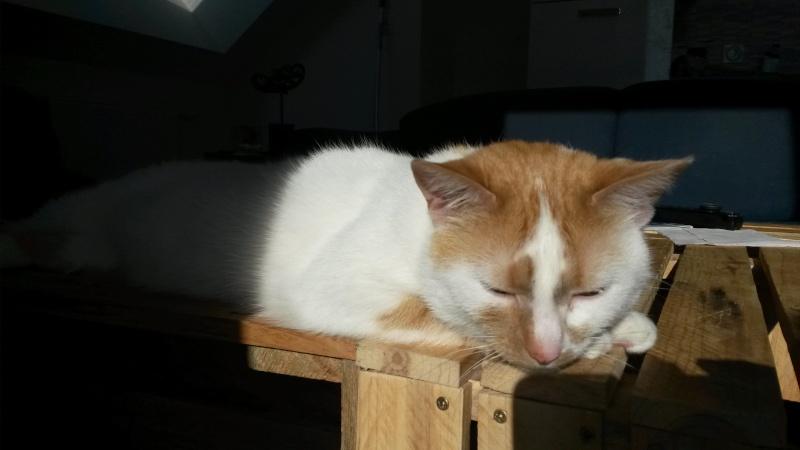 Cannelle, femelle type européenne blanche et rousse née 1er juillet 2010 - Page 2 16949810