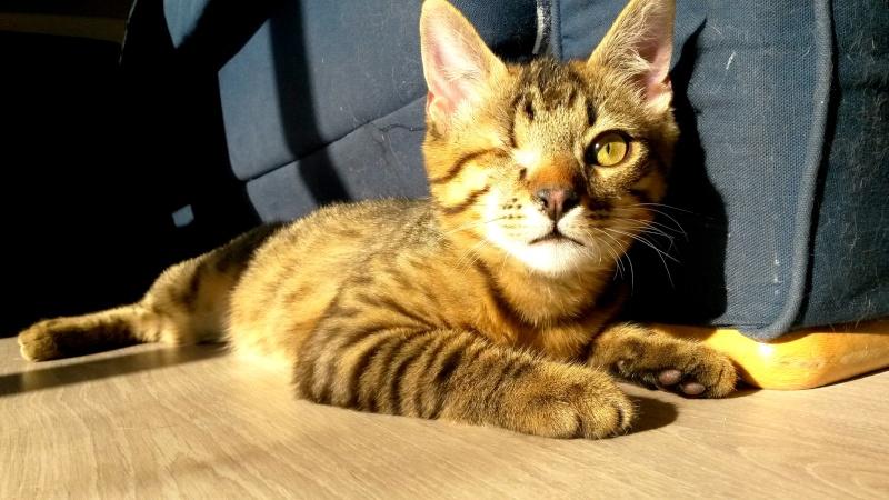 Albator, mâle type européen tigré né 15/10/2014 - Page 5 17053110
