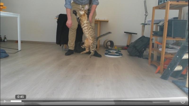 Albator, mâle type européen tigré né 15/10/2014 - Page 5 Sans_t10