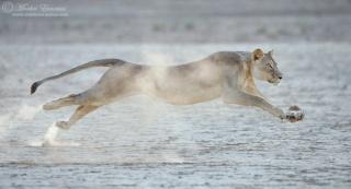 Aslan / Journal Liones10