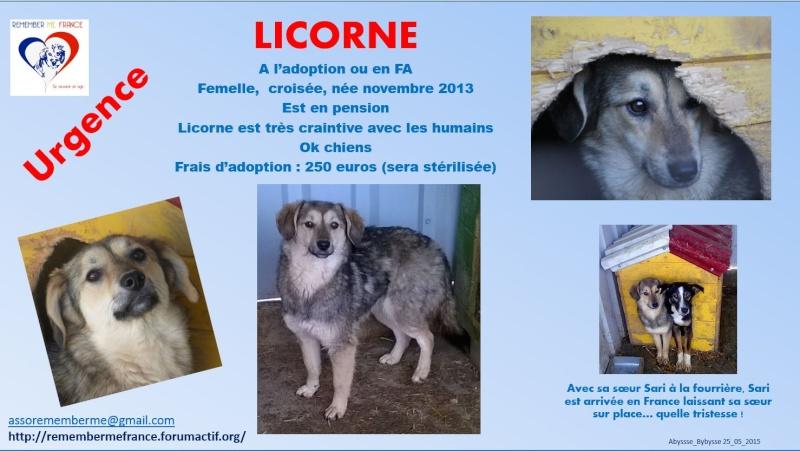 LICORNE, femelle taille petite à moyenne née en 2013 (Pascani) - Page 4 Licorn16