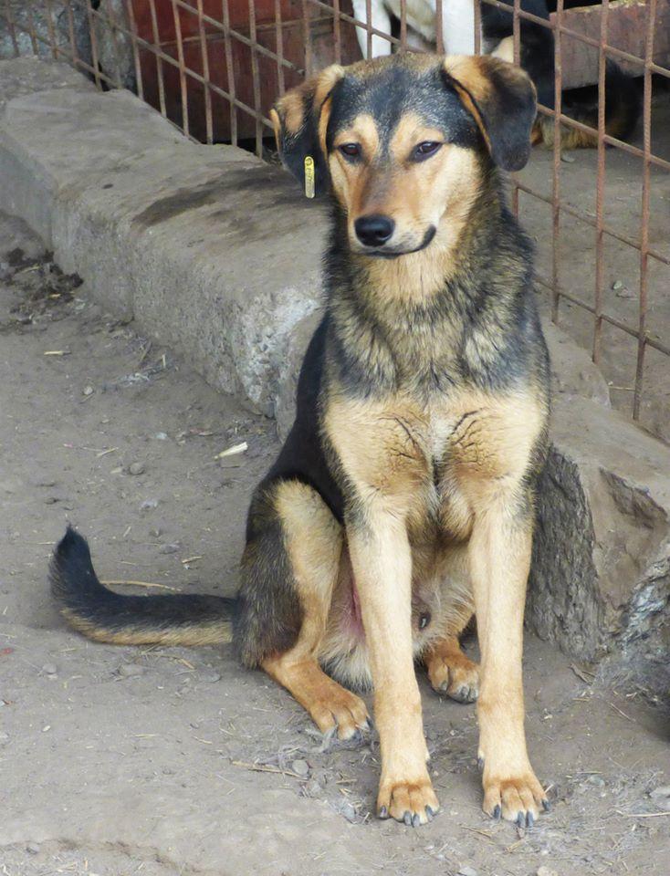PAAZ, chiot mâle, croisé, taille moyenne (PASCANI)-En fourrière - pris en charge par une autre association Paaz10