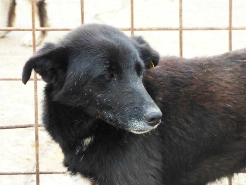 VIOLETTE - Femelle croisée, taille moyenne née env décembre 2010 (PASCANI) - en FA chez kimcham (dpt49) - doit changer de famille ! - Page 2 Violet10