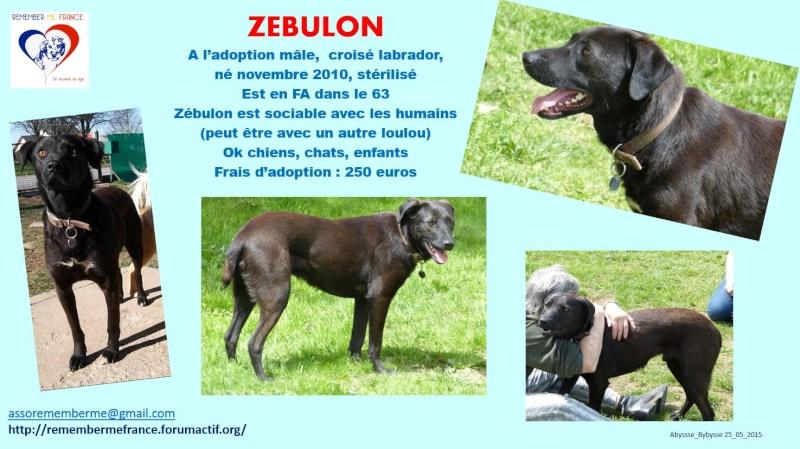 ZEBULON - mâle, croisé labrador (PASCANI) - chez Chantal(depart63) - ADOPTE PAR PATRICK (63) - Page 8 Zebulo10