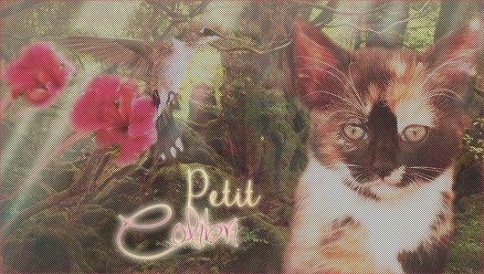Petit Colibri  | Femelle | 4 lunes | Ombre [LIBRE] 14101910