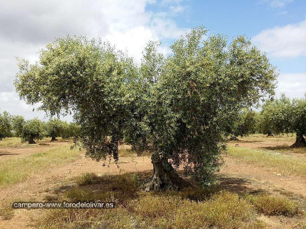 cosecha 2015-16 - Página 3 Florac11