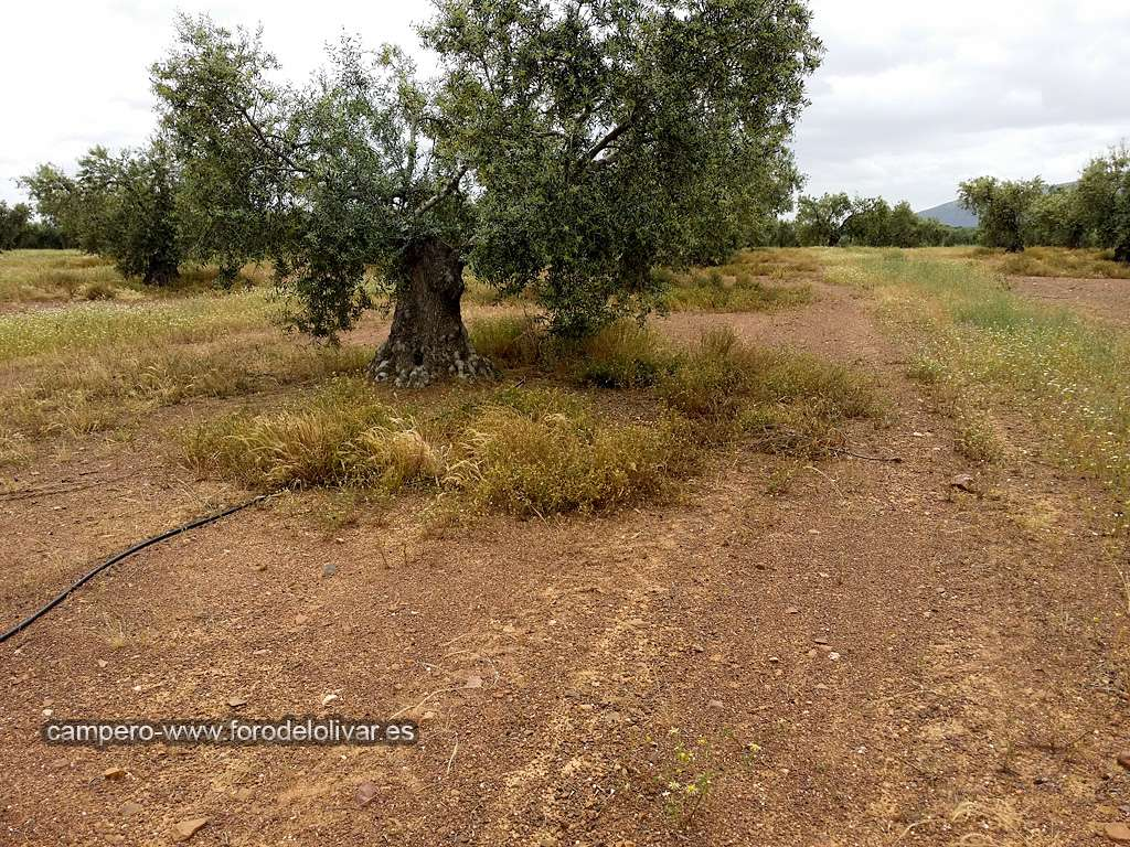 Consejo compra desbrozadora manual (Badajoz) Ruedos10