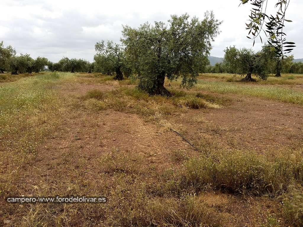 Consejo compra desbrozadora manual (Badajoz) Ruedos11