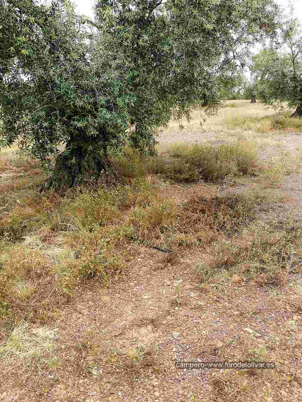Consejo compra desbrozadora manual (Badajoz) Ruedos13