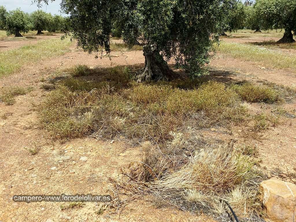 Consejo compra desbrozadora manual (Badajoz) Ruedos14