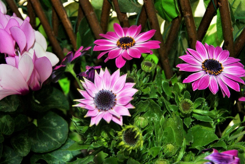 instant fleurit  Dsc01611