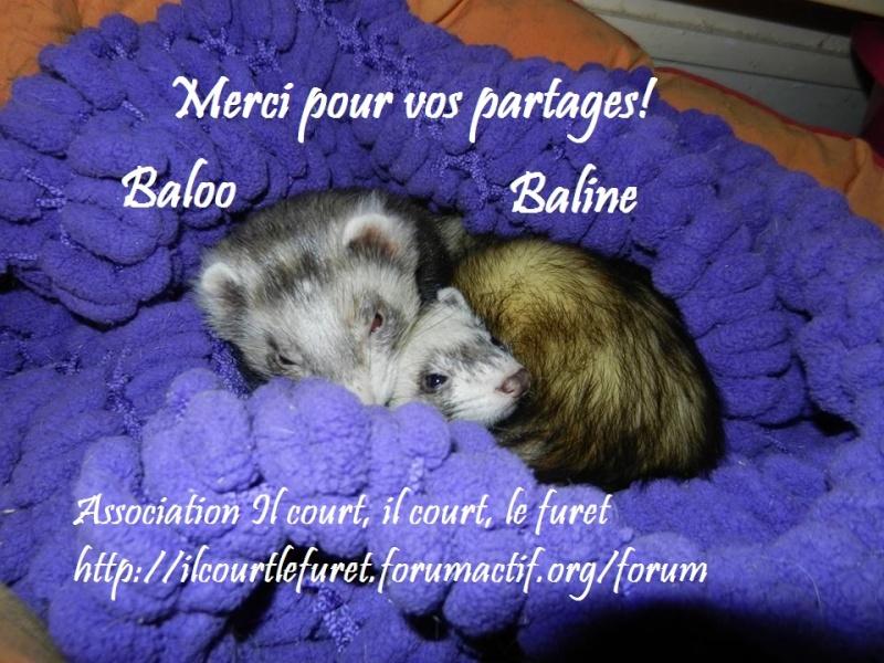 Baloo et Baline, gentil couple à l'adoption 11096411