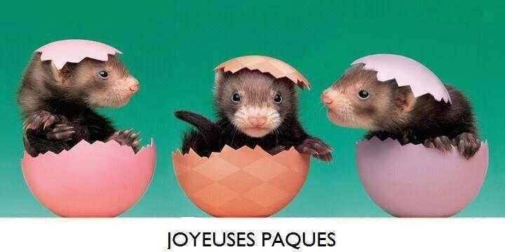Joyeuses pâques! 11138510