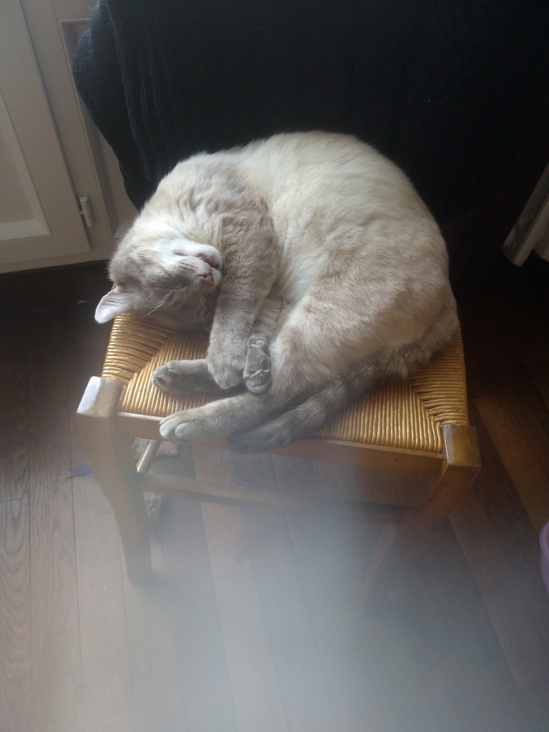 O'Malley, chat mâle type siamois tabby point aux yeux bleus né 01/01/2012 - Page 3 Img_2019