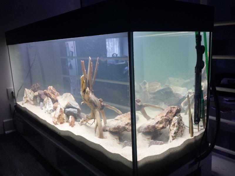 Nouveau aquarium - Page 4 20150415