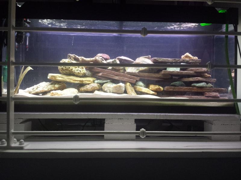 Aquarium Juwel 240 litres cichlidés - Page 2 20150427
