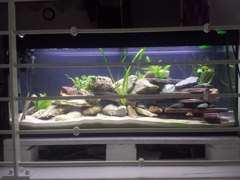 Aquarium Juwel 240 litres cichlidés 20150432
