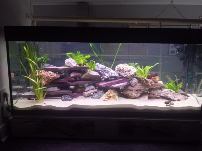 Aquarium Juwel 240 litres cichlidés 20150433