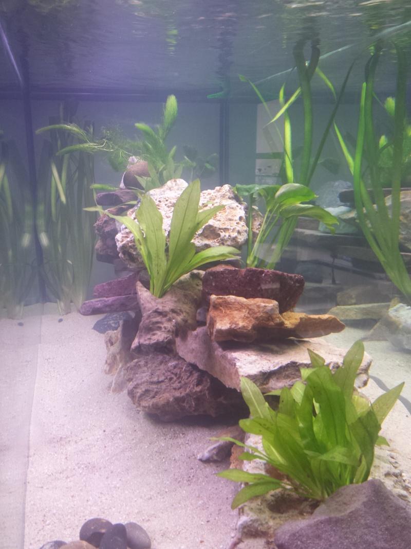 Aquarium Juwel 240 litres cichlidés 20150434