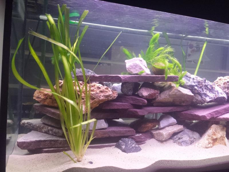 Aquarium Juwel 240 litres cichlidés 20150435