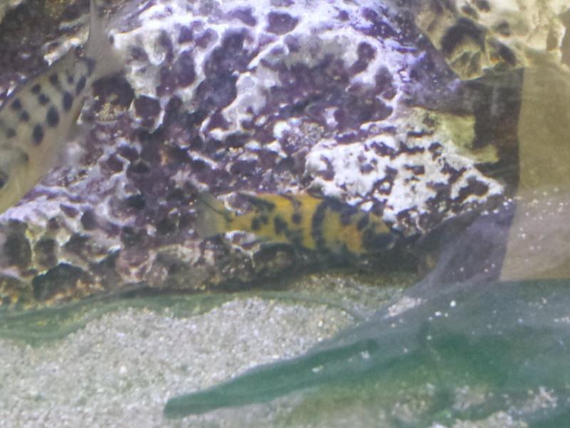 Aquarium Juwel 240 litres cichlidés 20150436