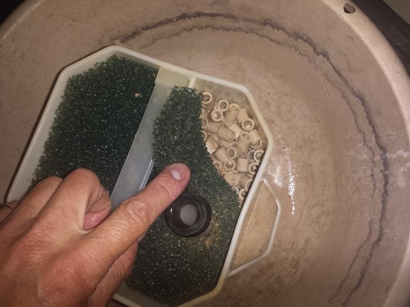 Aquarium Juwel 240 litres cichlidés 20150511