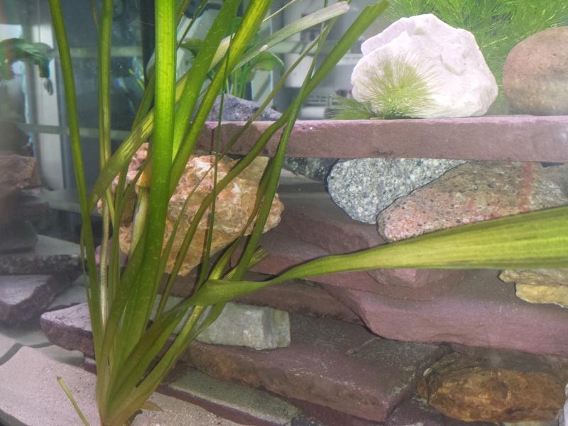 Aquarium Juwel 240 litres cichlidés - Page 2 20150514