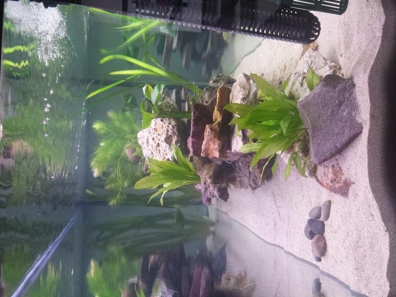 Aquarium Juwel 240 litres cichlidés - Page 2 20150515