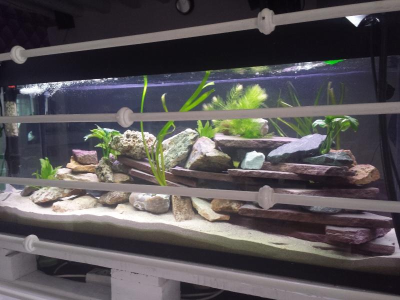 Aquarium Juwel 240 litres cichlidés - Page 2 20150517