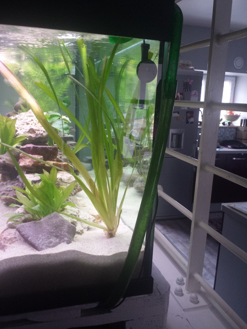 Aquarium Juwel 240 litres cichlidés - Page 2 20150520