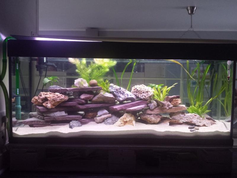 Aquarium Juwel 240 litres cichlidés - Page 2 20150521